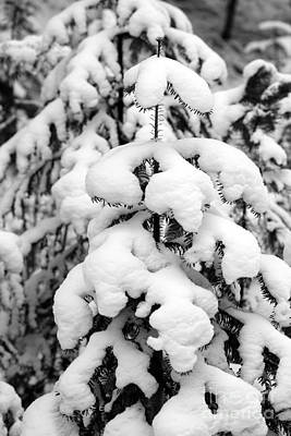 White Photograph - Snowy Tree - Black And White by Carol Groenen