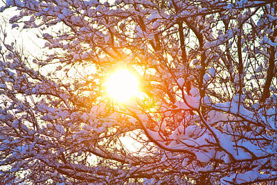 Photograph - Snowy Tree Branches And Sunshine by James BO Insogna