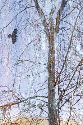 Snowy Tree Art Print by Carol Leigh