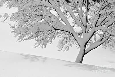 Snowy Tree Art Print by Jay Nodianos