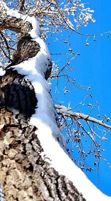 Jerry Sodorff Royalty-Free and Rights-Managed Images - Snowy Tree Trunk 14046 by Jerry Sodorff