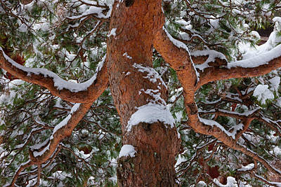 Snowy Tree, Yudanaka Onsen, Japan Art Print