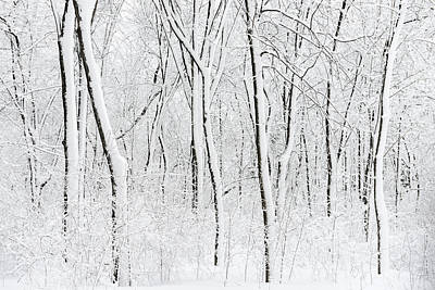 Montreal Winter Scenes Photograph - Snowy Trees Abstract by David Giral