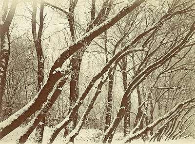 Snowy Trees Drawing - Snowy Trees In A Park, Possibly Amsterdam by Artokoloro