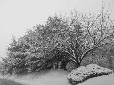 Photograph - Snowy Trees In Black And White by Michael Porchik