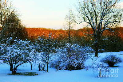 Snowy Trees In December Twilight - Pearl S. Buck Homestead Art Print by Anna Lisa Yoder