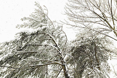 Photograph - Snowy Trees In The Wind I by Marianne Campolongo