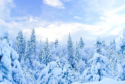 Photograph - Snowy Trees by Richard and Ellen Thane
