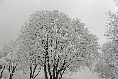 Photograph - Snowy Trees by Richard Bryce and Family
