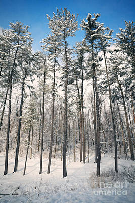 Photograph - Snowy Trees by Sharon Dominick