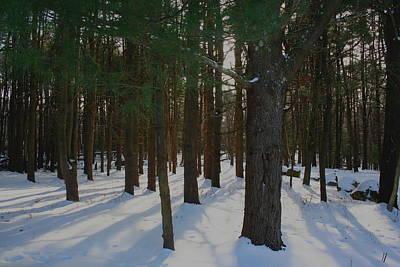 Snowy Trees Art Print by Stephen Melcher