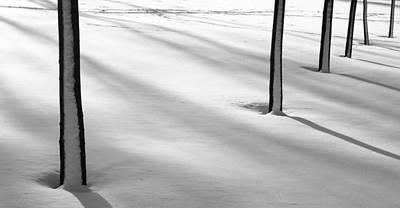 Photograph - Snowy Trunks by Arkady Kunysz