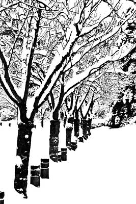 Photograph - Snowy Walk by Alicia Kent