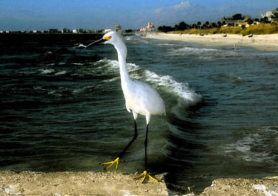 Snowy Digital Art - Snowy White Egret At Pass O Grill Beach Florida by David Lee Thompson