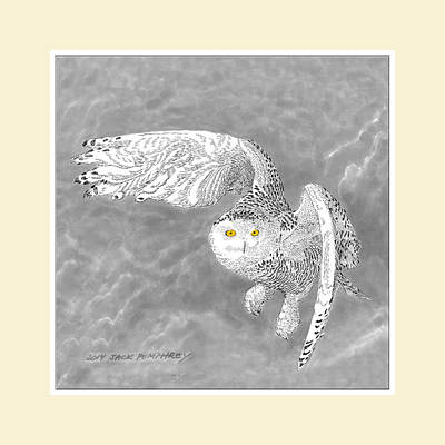 Yellow Beak Drawing - Snowy White Owl Drawing by Jack Pumphrey