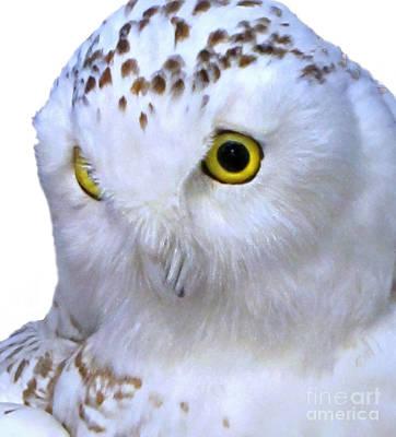 Photograph - Snowy White Owl Face Art Prints by Valerie Garner