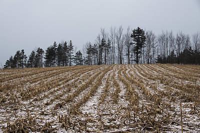 Photograph - Snowy Winter Cornfields by Georgia Mizuleva