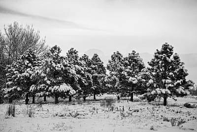 Photograph - Snowy Winter Pine Trees In Black And White by James BO  Insogna