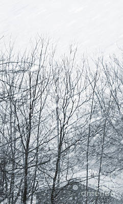 Photograph - Snowy Winter Storm Blowing Through The Trees by Sandra Cunningham