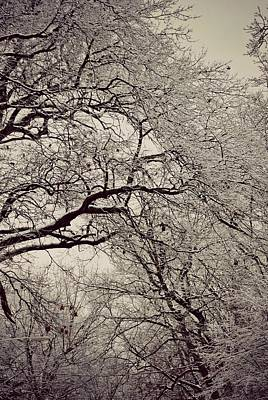 Icy Photograph - Snowy Wonderland by Dawdy Imagery