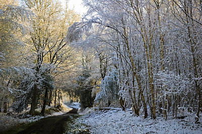 Photograph - Snowy Woodland by Mick House