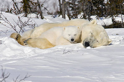 Photograph - Snuggle Time by Richard Berry