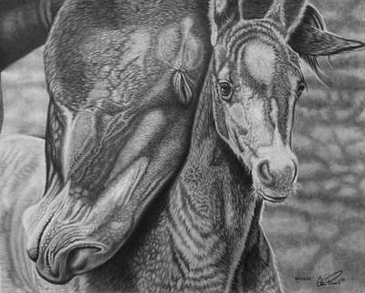 Mare Drawing - Snuggles by Glen Powell