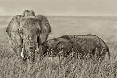 Sepia Wall Art - Photograph - Snuggling by Henry Zhao