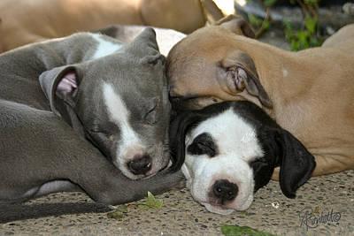 Photograph - Snuggly by Ann Ranlett