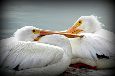 Photograph - Snuggly Pelicans by Laurie Perry