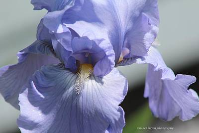 Photograph - So Blue by Nance Larson