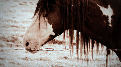 Horse Photograph - So Close by Rima Biswas