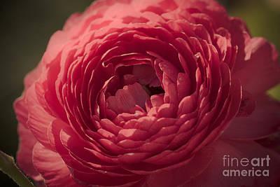 Photograph - So Pink by Ana V Ramirez