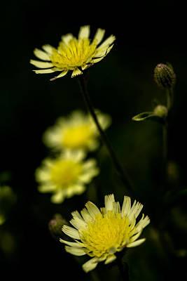 Photograph - So Shining by Edgar Laureano
