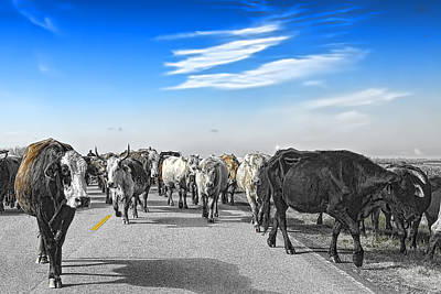 Cattle Drive Photograph - So This Is What Farm To Market Road Means - Desaturated by Gary Holmes