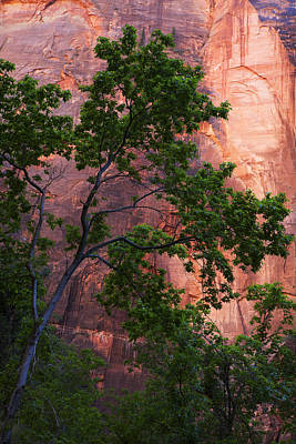 Photograph - So Zion 3 by Marilyn Hunt