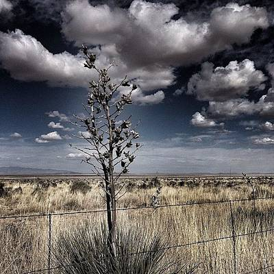 Photograph - Soap Tree Yucca At The Trinity Site by Kathleen Messmer