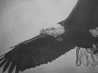 Bald Eagle Pencil Drawing Drawing - Soar by Erica Raymond