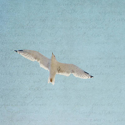 Photograph - Soar Free - Square by Lisa Parrish