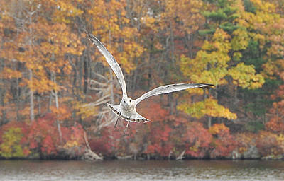 Photograph - Soar by Joanne Brown