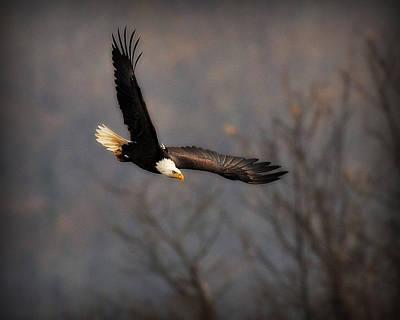 Digital Art - Soar Like An Eagle by Angel Cher