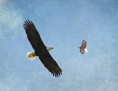 Eagle In Flight Photograph - Soar On The Wings Of Eagles by Angie Vogel