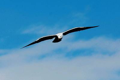 Canadian Photograph - Soar What by Don Mann