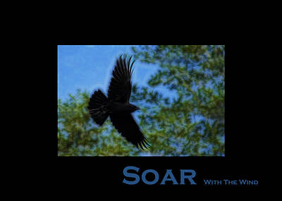 Photograph - Soar With The Wind - by Lesa Fine