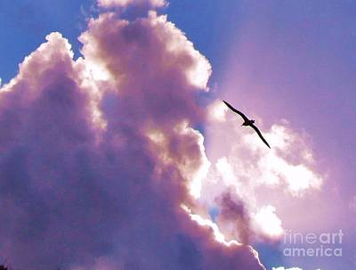 Photograph - Soaring Albatross by Michele Penner