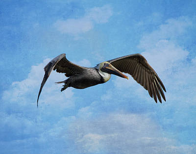 Kim Bird Photograph - Soaring By by Kim Hojnacki