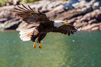 British Columbia Photograph - Soaring Eagle by Ian Stotesbury