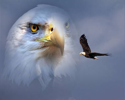 Digital Art - Soaring Eagle by Mary Almond