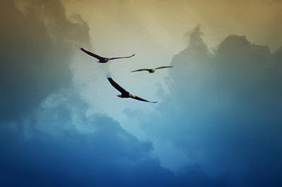 Soaring Eagles Art Print by Bill Cannon