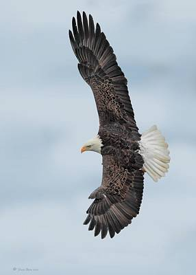 Photograph - Soaring High by Daniel Behm